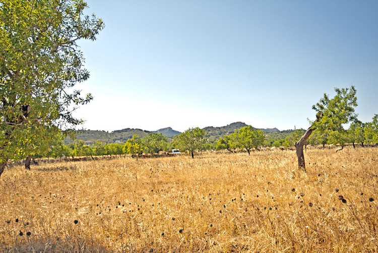 Finca-Plots for sale with sea view in the southeast of Mallorca