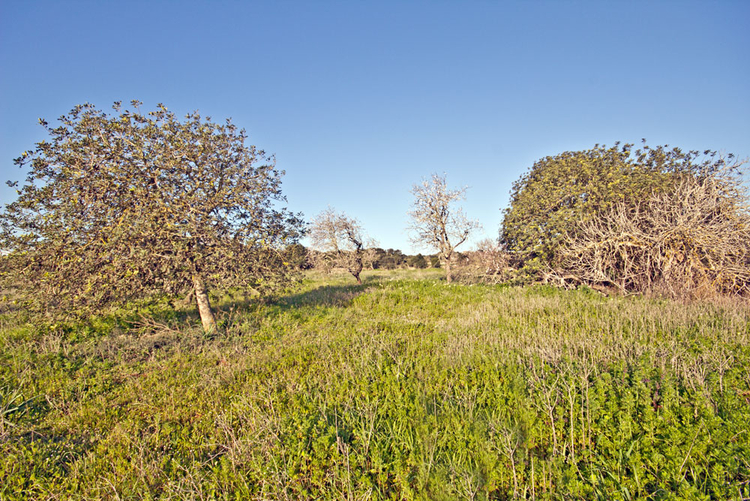 Land deals in Santanyi in the southeast of Mallorca